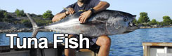 Big Game Fishing Croatia - Tuna fish