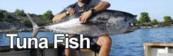 Big Game Fishing Croatia - Tuna fish