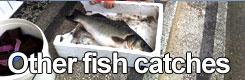 Big Game Fishing Croatia - Othef rish catches